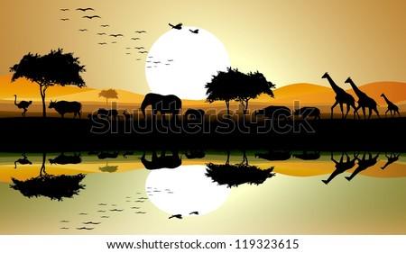 beauty silhouette of safari