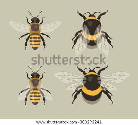 Bee and Bumblebee