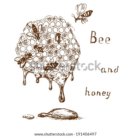 Bee and honey illustration. Hand drawn insect background