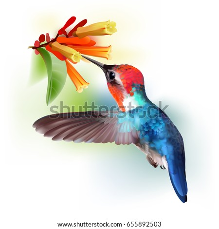 Bee Hummingbird. Realistic vector illustration of a flying male Bee hummingbird sipping nectar from flowers of Hamelia.