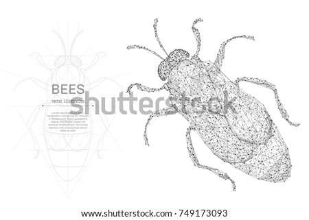 bee low poly wireframe isolated