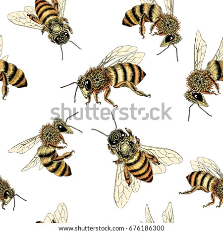 bee seamless pattern in honey