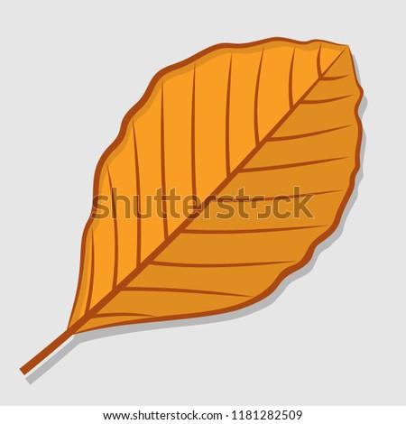 beech autumn leaf isolated on a