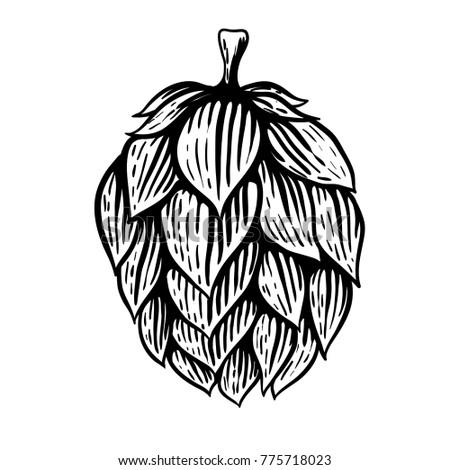 Beer hop illustration in engraving style isolated on white background. Design element for logo, label, emblem, sign, poster, label. Vector illustration