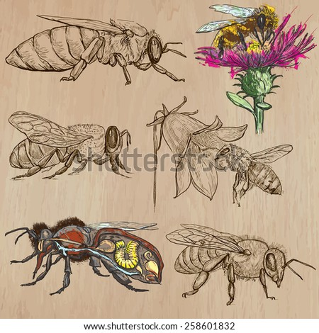 BEES, BEEKEEPING and HONEY. Collection of an hand drawn vector illustrations (pack no.2). Each drawing comprises of three or four layers of lines, the colored background is isolated.