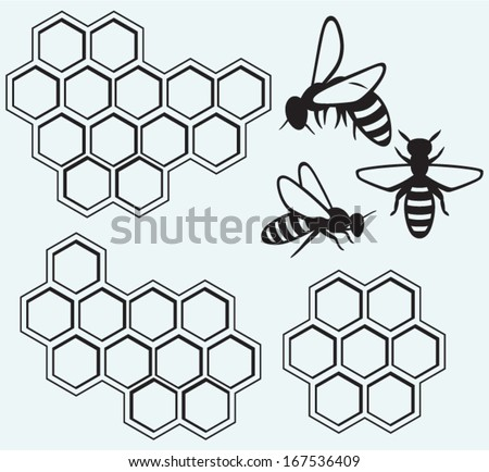 bees on honey cells isolated on