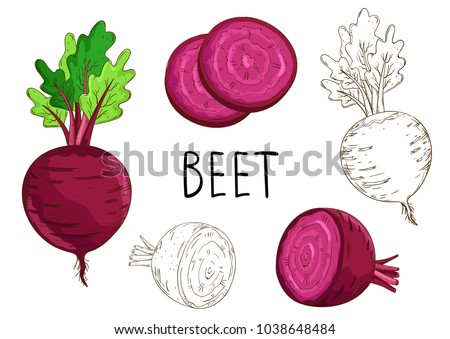 Beet isolated on white background. Vector vegetables set.