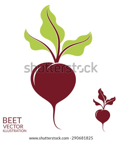 Beet. Isolated vegetables on white background. Vector