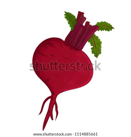 Beet. Realistic vegetable Vector illustration eps10