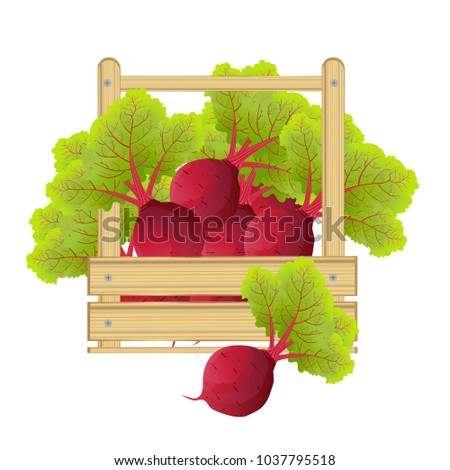 beet root. beets with a bundle of leaves. useful vegetables. vegetarianism. Logo Vector illustration with text background.