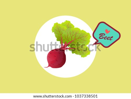 beet root. beets with a bundle of leaves. useful vegetables. vegetarianism. Vector illustration with text background.