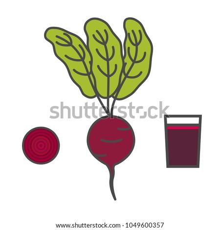 Beet. Slice of beet. Beet juice. Isolated Vector Illustration.
