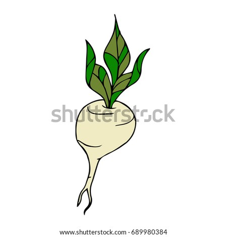 Beet vector illustration. Doodle style. Design icon, print, logo, poster, symbol, decor, textile, paper, card.