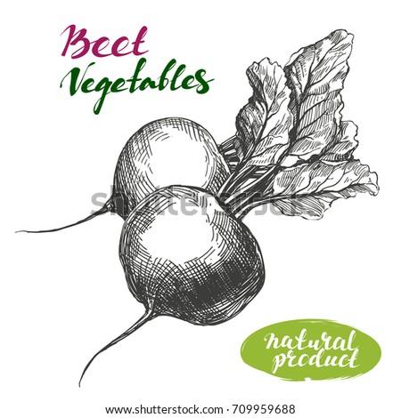 Beet vegetable set. Detailed engraved. Vintage hand drawn vector illustration realistic sketch.