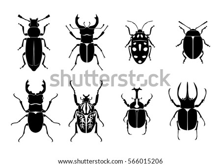 stock-vector-beetle-flat-illustration-vector-insect-bug-nature