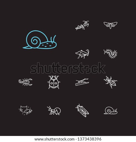 Beetle icons set. Louse and beetle icons with mantis, butterfly and stickbug. Set of creature for web app logo UI design.