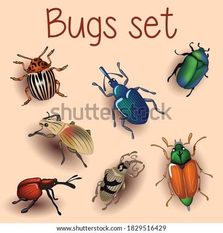 beetle  set with beetles