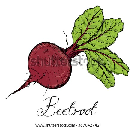 Beetroot With Leaves color, Vintage retro woodcut radish or beets, beet vegetable cartoon illustration..Beets, Beet, Beetroots