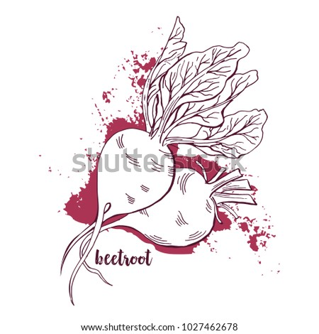 Beetroots Watercolor. Hand Drawn Vegetables On White Background. Painted Beet Roots With Leaves. Abstract Artistic Harvest Element Vector Illustration.
