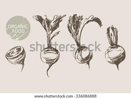 beets   hand draw sketch, vector