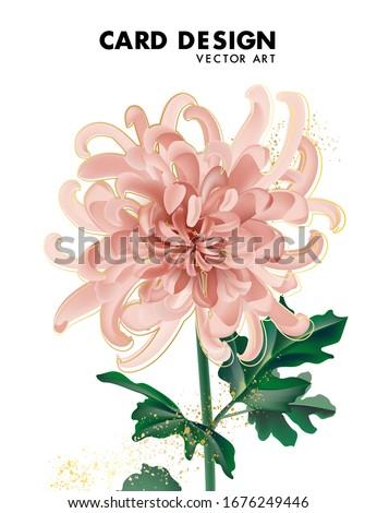 beige chrysanthemum flower