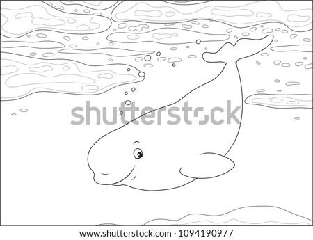 beluga whale swimming among