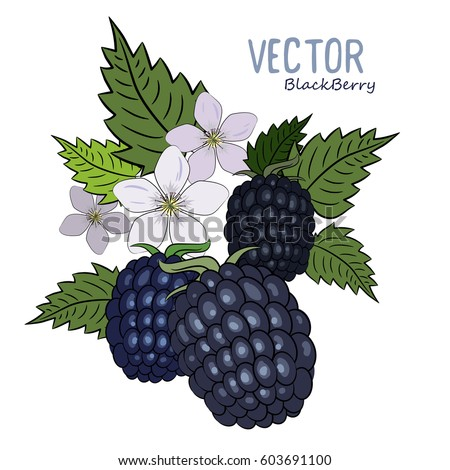 berries and flowers of the