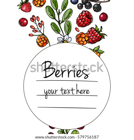 Berries and leaves. Wild berries painted color line on a white background. Cranberry, cranberries, currants, raspberries, strawberries, gooseberries, blueberries, barberries