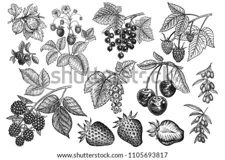 Berries big set. Realistic strawberries, cherries, raspberries, blackberries, goji, currants, blueberries, gooseberries isolated on white background. Hand drawing. Vintage. Black and white. Vector.