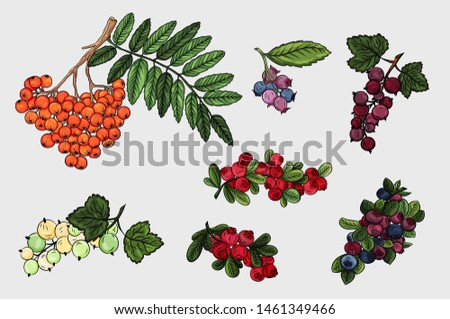 berries collection colorful