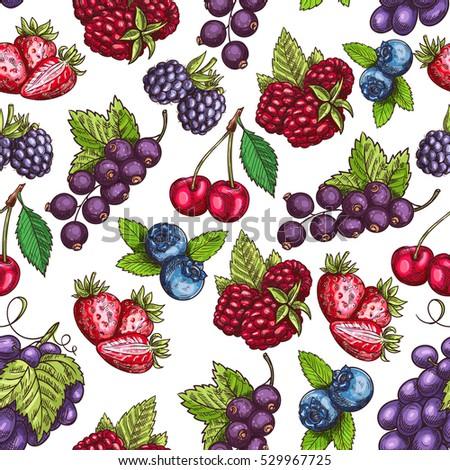 berries pattern vector