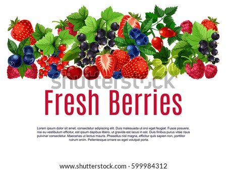 berries poster or banner