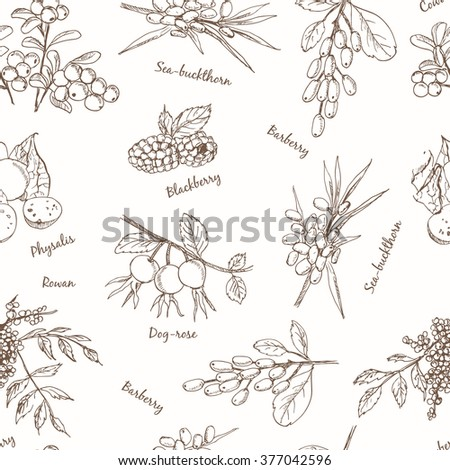 Berries set seamless pattern. Useful for restaurant identity, packaging, menu design and interior decorating.