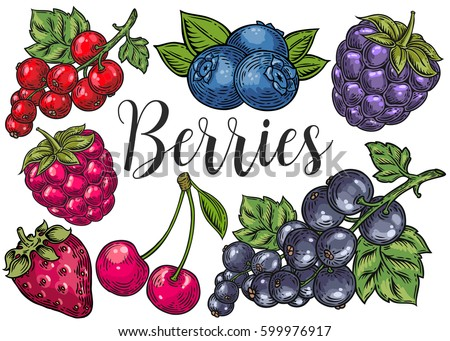 berry color hand drawn vector
