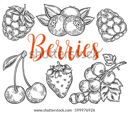 Berry Hand drawn vector set. Fruit botany illustration. Berries engraving doodle sketch etch line. Currant, raspberry, strawberry, blueberry, cherry on white background. Dessert ingredient #599976926