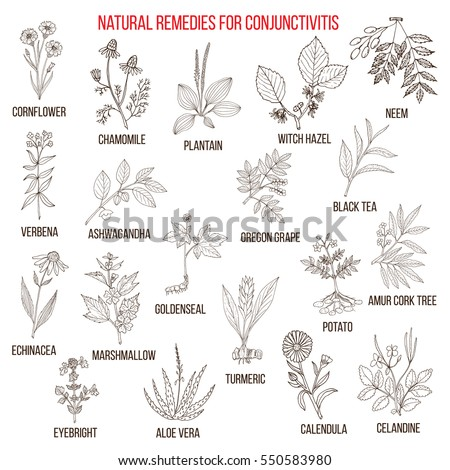 best herbal remedies for