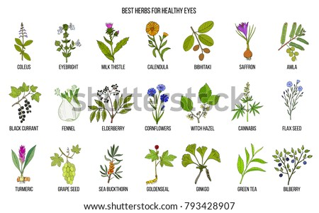 best medicinal herbs for