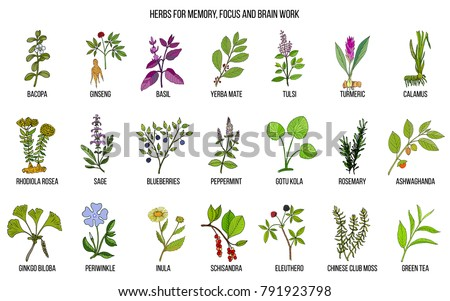 Free Medicinal Plant Vector - Download Free Vector Art, Stock