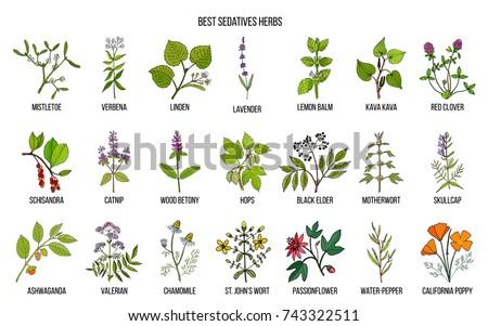 Best sedatives herbs. Hand drawn vector set of medicinal plants
