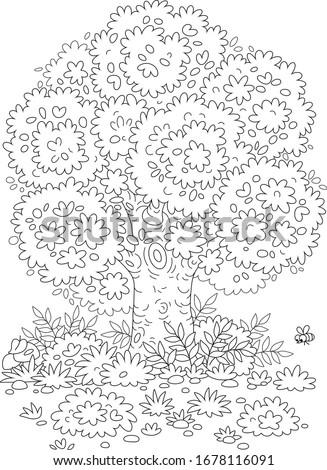 big branchy oak tree  bushes