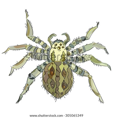 Big brown fluffy spider