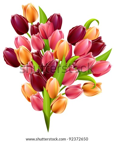 Big bunch of tulips and isolated on white background - stock vector