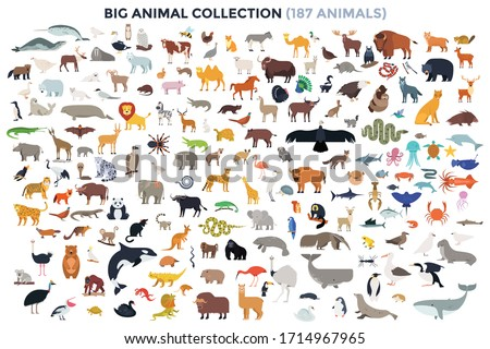 Big bundle of funny domestic and wild animals, marine mammals, reptiles, birds and fish. Collection of cute cartoon characters isolated on white background. Colorful vector illustration in flat style. stock photo