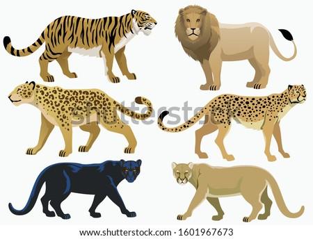 big cats bundle set collection