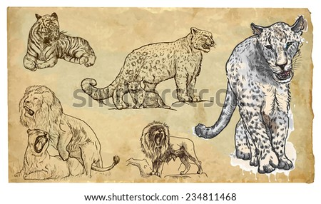 big cats collection of an hand
