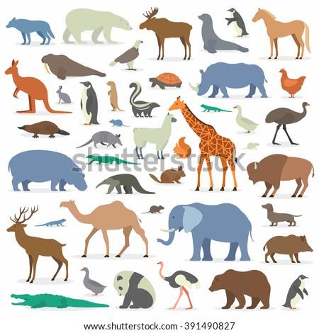 big collection animals