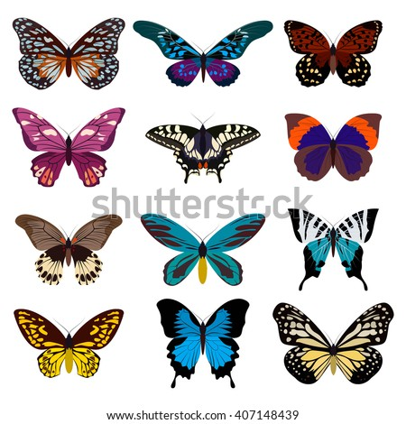 Big collection butterfly of colorful icon set. Art butterflies isolated on white. Vector illustration