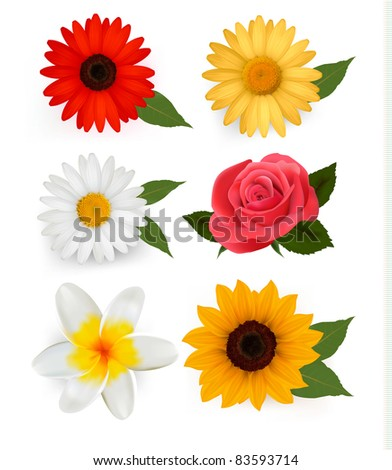 Big collection of beautiful colorful flowers. Vector illustration.
