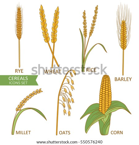 Big collection of cereals isolated. Hand drawn icons set vector. Colorful background with sketch objects. Illustration with plants, good for printing. Decorative elements design