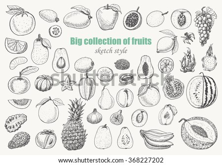 Big collection of fruits on white background. Vector  illustration for your design #368227202